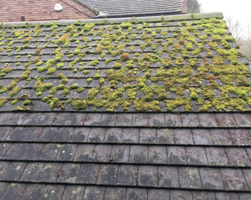 Roof Cleaning Service Moss Removal